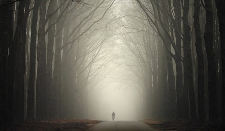 foggy-road-in-autumn-11595